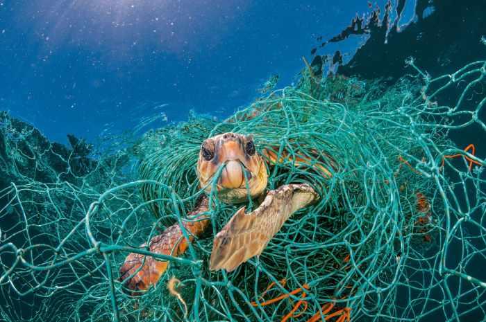 تاثیر پلاستیک در طبیعت