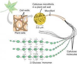 ساختار سلولز